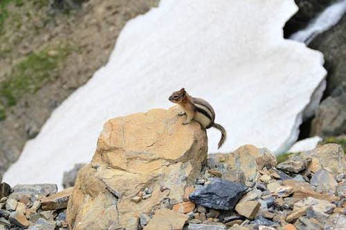 The Rock Climbing Chipmunk