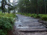 Boggy section of the trail to Barania Góra from the Przysłop hut