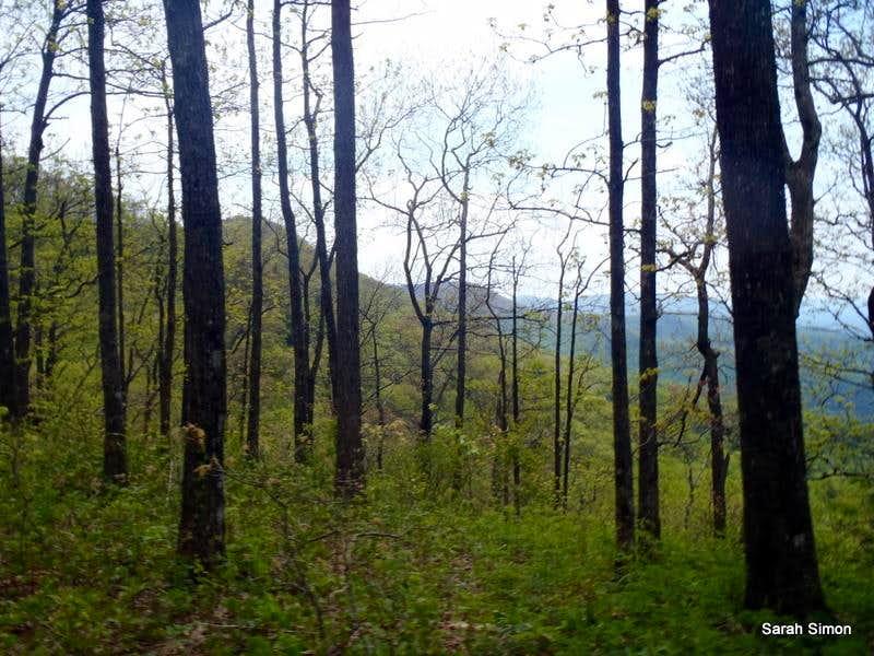 Wooded Summit Area