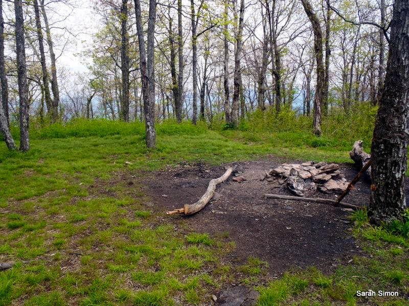 Summit Area Campsite: Wolf Laurel Top