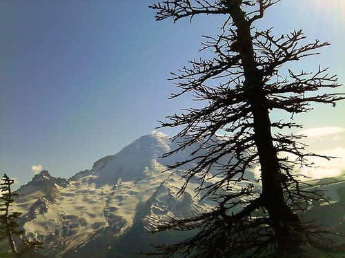 Mount Rainier from Antler