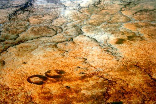 Bison Tracks at Prismatic