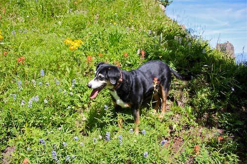 Duchess among wildflowers