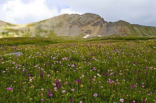 Flowers and Missouri Mountain