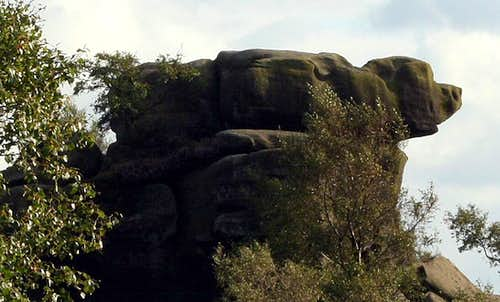 Dog at Brimham Rocks