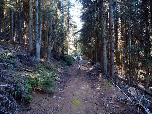 Mount Annie - Road 300