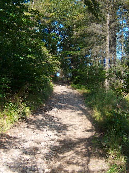 Trail on Równica