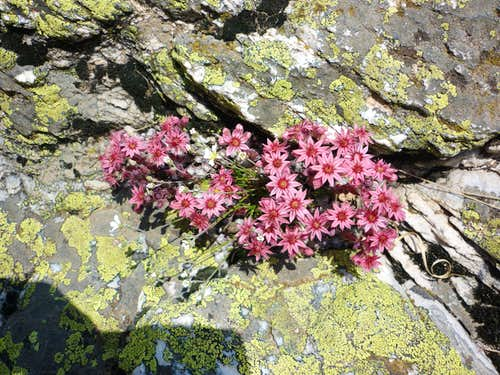 Flowers sprouting out from the rock