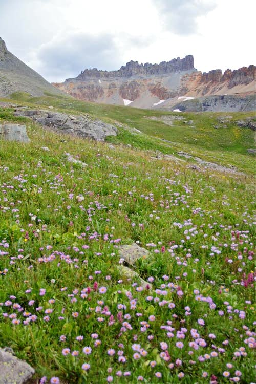 Pilot Knob and wildflowers