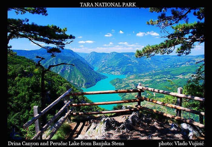 Tara view