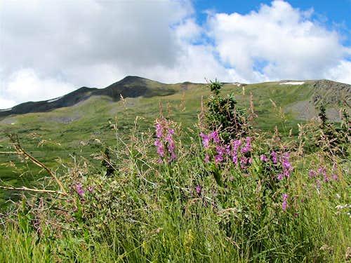 Fitzpatrick Peak