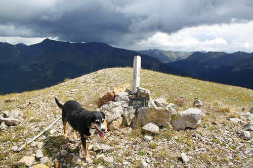 Duchess on summit of Anvil Mountain