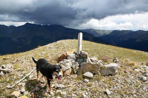 Duchess on summit of Anvil Mountain