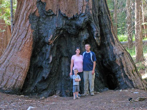 Giant sequoia family pic