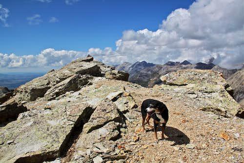 Duchess on summit stroll
