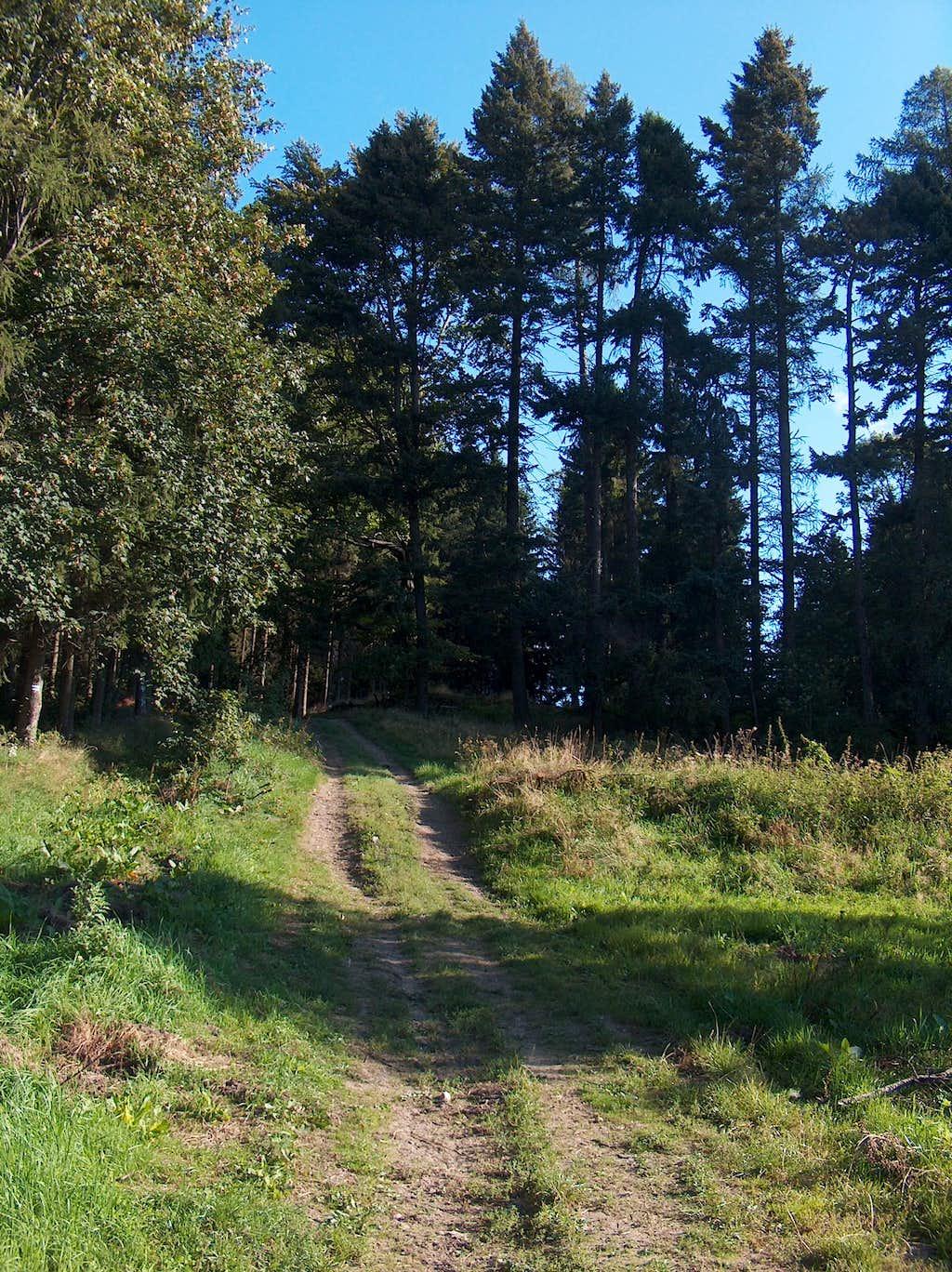 Trail between Łysa Góra and Skopiec
