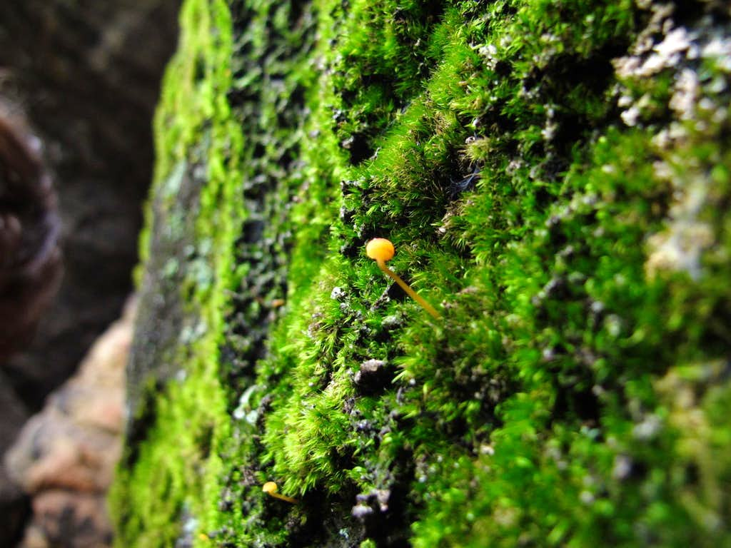 A tiny orange mushroom growing on the moss covering the sandstone