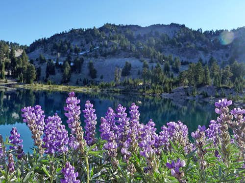 Mount Helen with Lupines