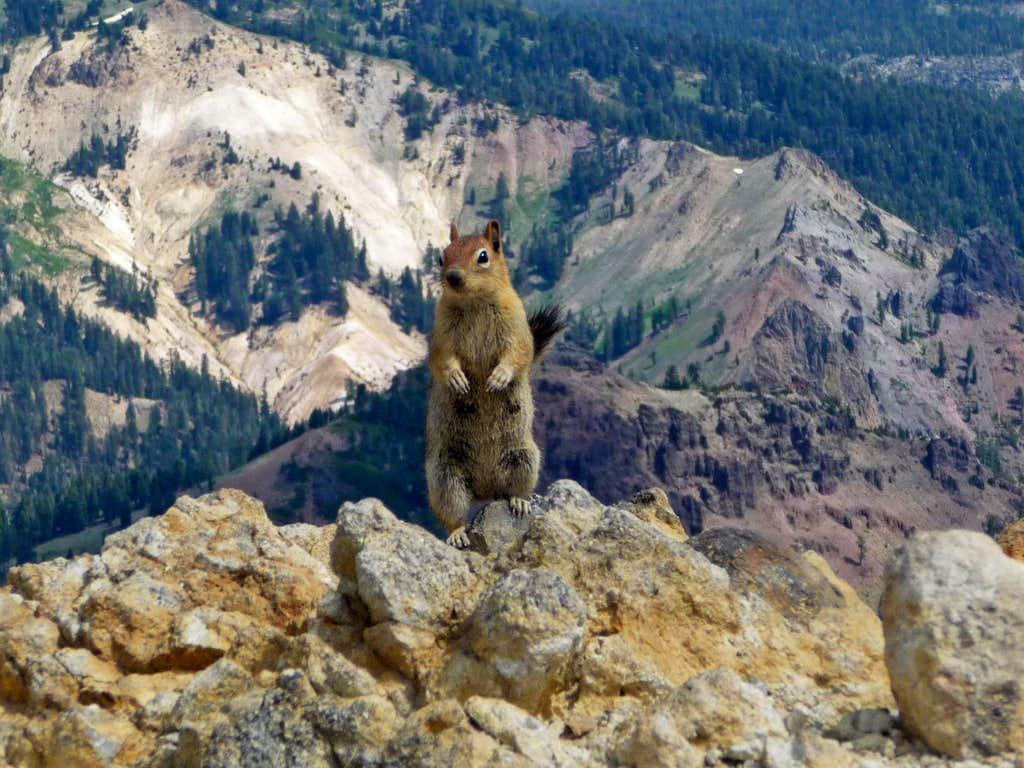 A Beggar on the Summit of Brokeoff Mountain