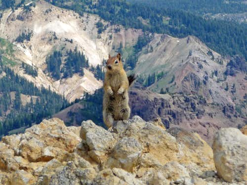 A Beggar on the Summit of Brokeoff Mountain
