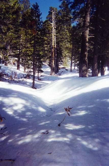 Marion Mt. trail, April 2000