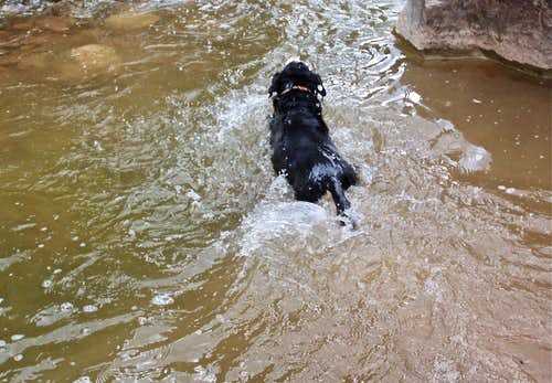 Duchess swimming