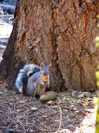 Very Fat Squirrel