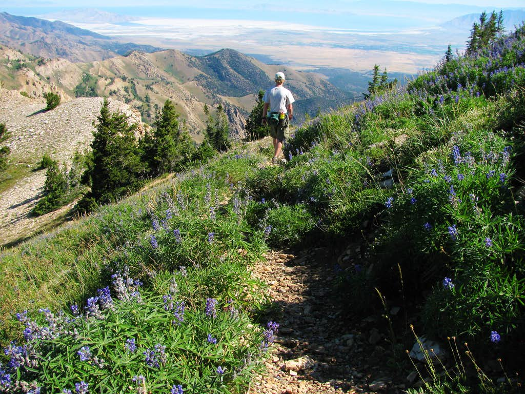 Trail north of Deseret Peak summit