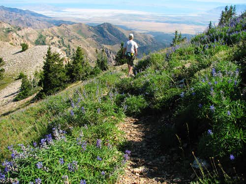 Trail north of Deseret Peak summit
