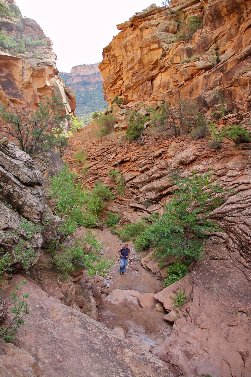 Scenery of Rough Canyon