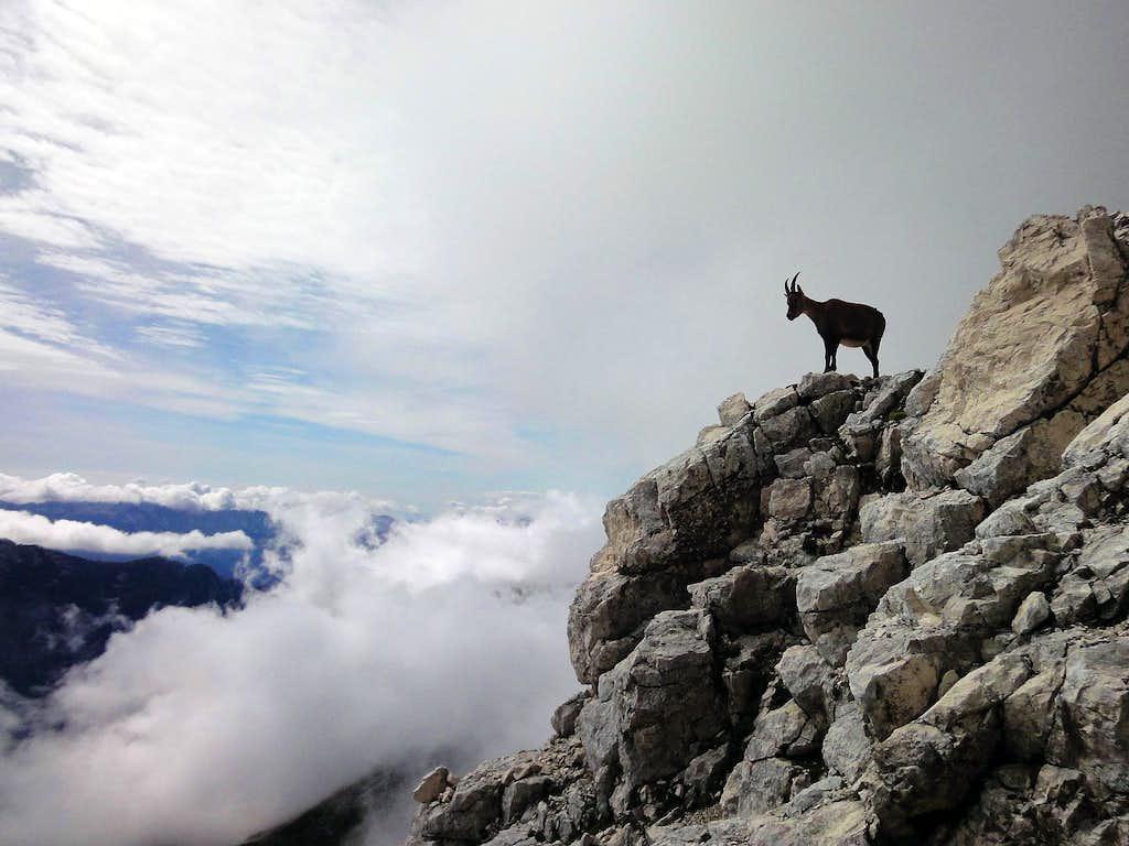 Ibex - Montaz is his homeland...