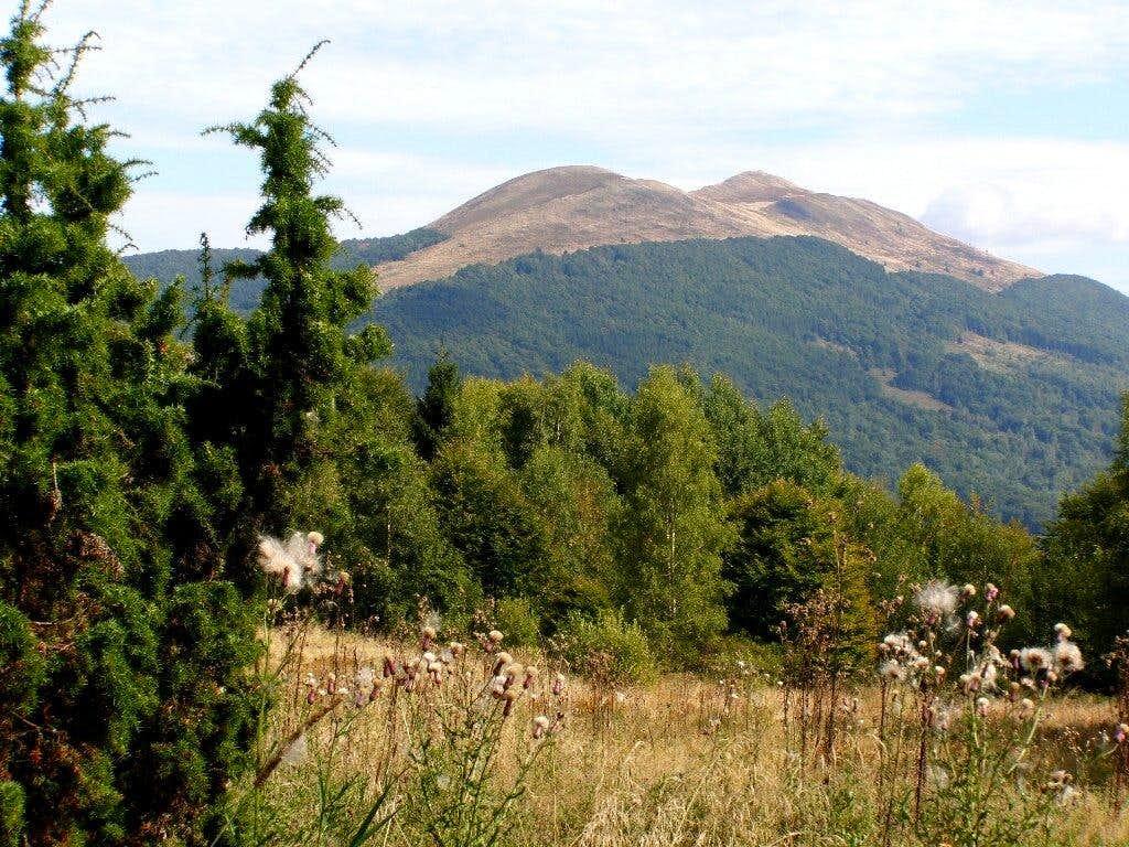 Carynska Meadow
