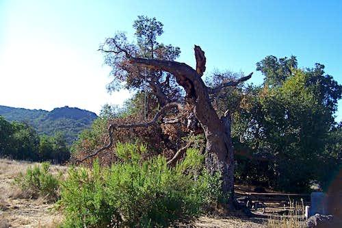 Nineteen Oaks Trail