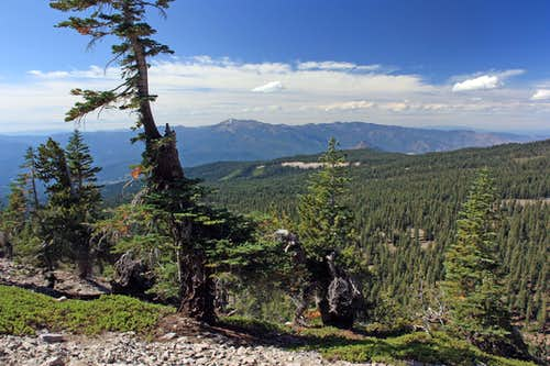 Trinity Alps from Gray Butte