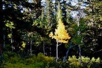 crazy yellow tree