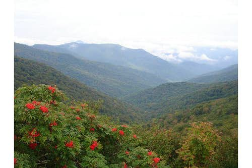 NC Flower View