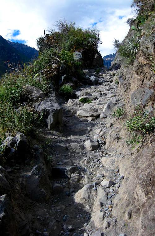 Trail cut into the slopes of Colca Canyon