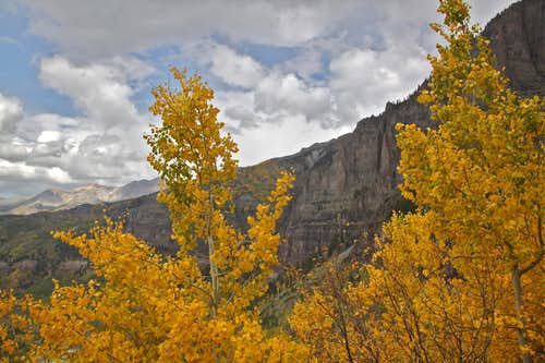 Viewing Via Ferrata through the aspens