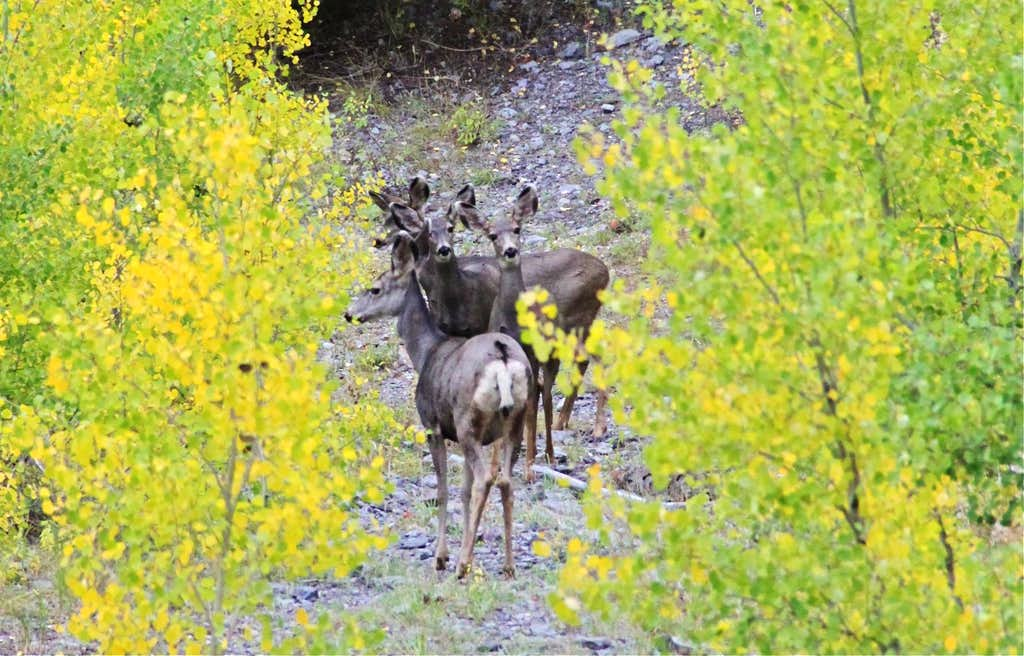 Deer on descent trail