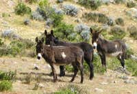Donkeys (or are they mules?) in Quebrada Huayuray, Peru