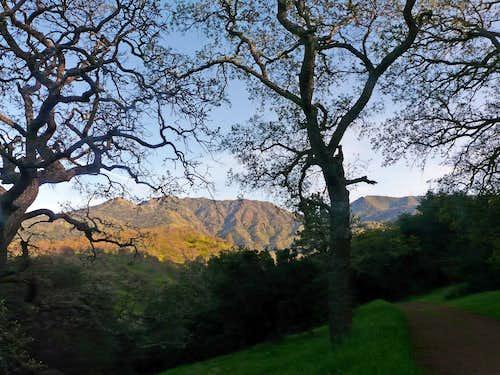 Oaks below Mt. Diablo