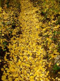 A trail of Golden Aspen Leaves