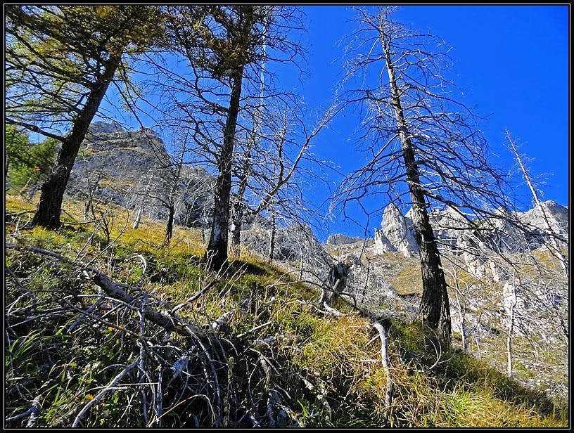 On the SE slope of Bocco di Filadonna