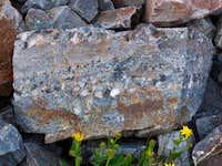 Grenadier quartzite