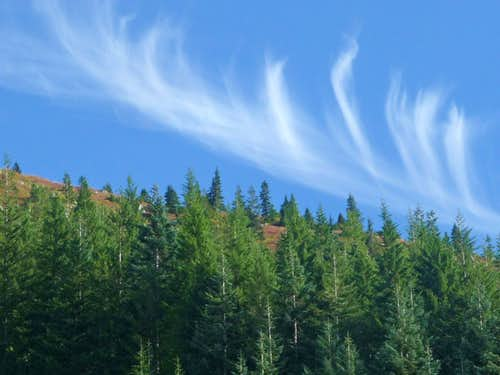 Cirrus Clouds Above the Trees