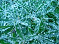 Ice Crystals on the Plants