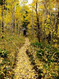 A Glowing Trail