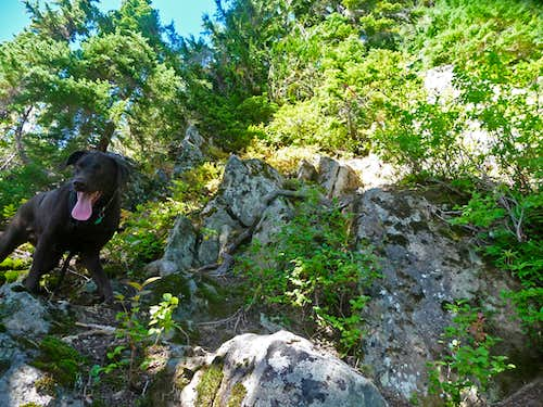 Happy Dog on the Scramble