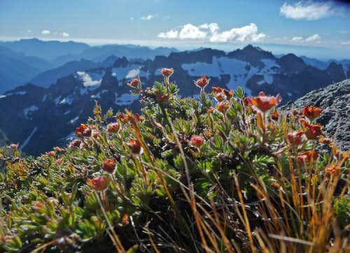 Flowers on the Summit