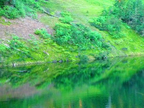 Lush Green Reflection